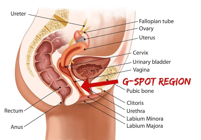 G Spot Region - What is the G-Spot? And How Can I Find It?